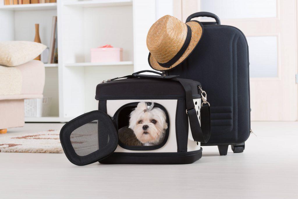 Quiero viajar con mi mascota, ¿cómo lo hago?
